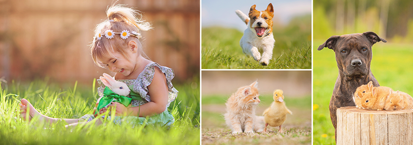 Im ZooRoyal Online-Shop, können Sie hochwertigen und Hygieneartikeln Tierbedarf, Tierfutter oder Aquaristik günstig kaufen