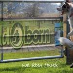 Wildborn Hundefutter Gutscheincode 2017